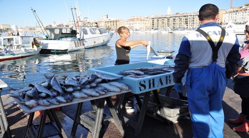 Купить рыбы