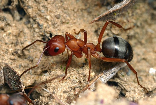 Интересные факты из жизни муравьев