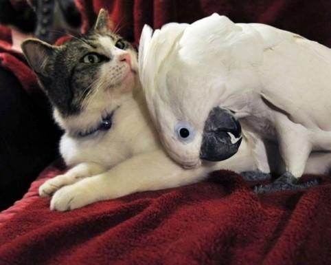 Дружба между различными видами животных