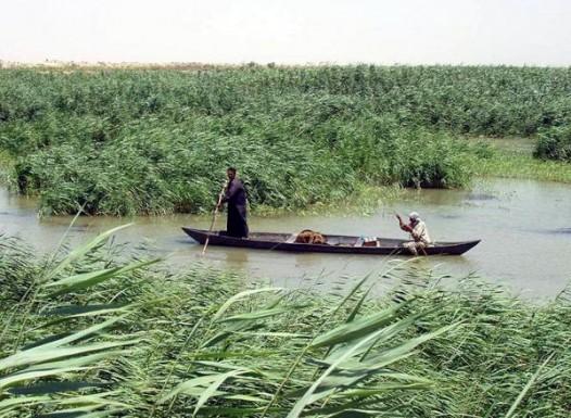 Значимость болот в жизни человечества