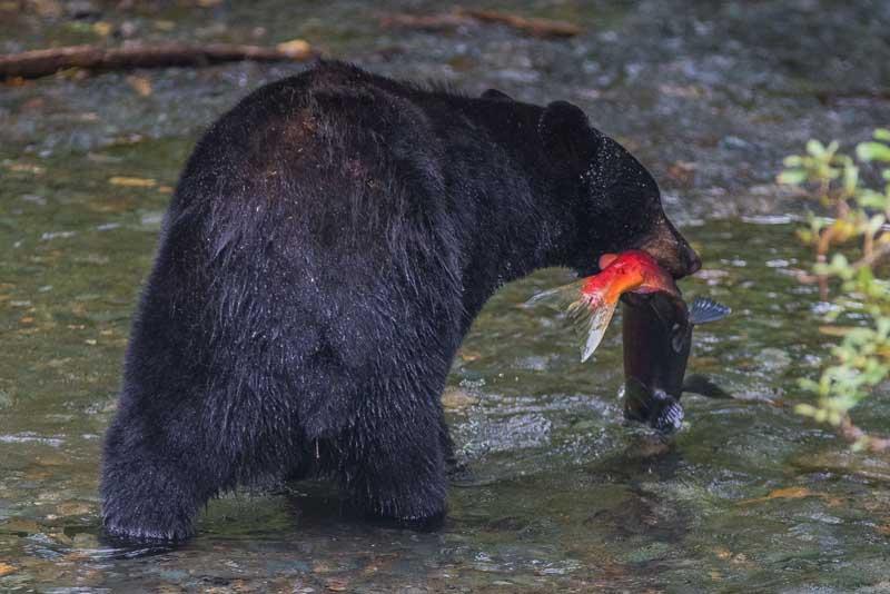 Уникальная экосистема Аляски