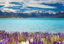 Как сэкономить на путешествии в Новую Зеландию