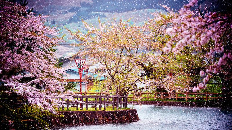 Где можно полюбоваться цветением деревьев и цветов