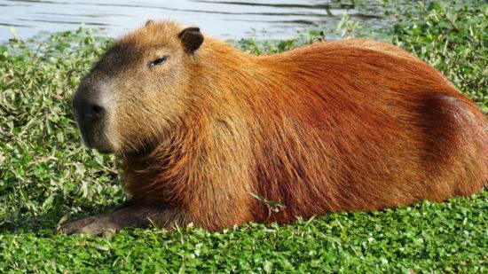 интересные факты про популярных в Интернете животные