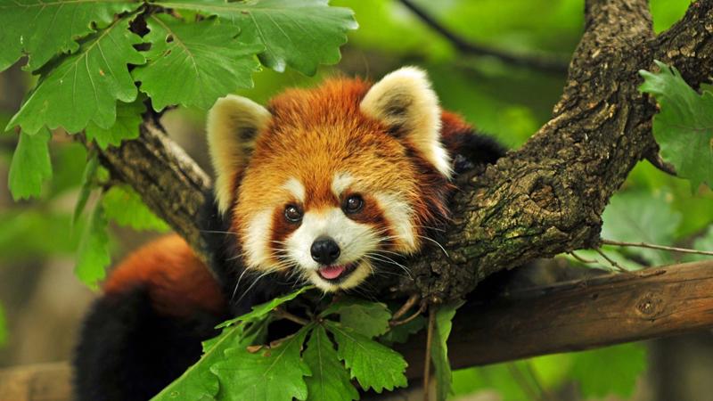 Среда обитания животных, популярных в Интернете