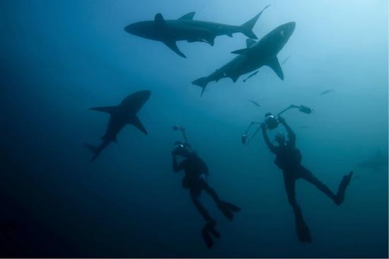 Понырять с акулами среди самых красивых пейзажей в мире
