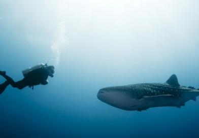 Лучшие места в мире для дайвинга с акулами