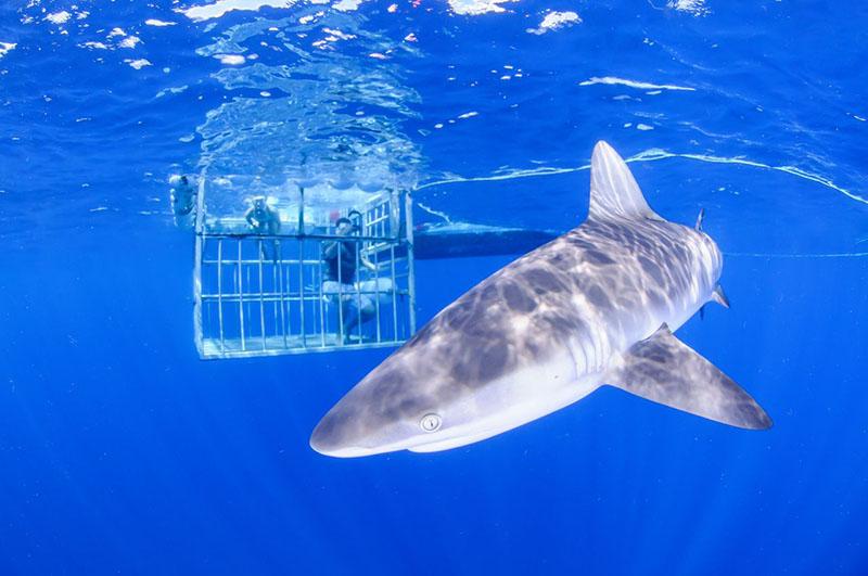 Под водой акулы приплывут к вам, заинтересованные огромными металлическими прутьями
