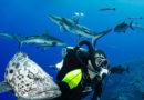 Подводное плавание с аквалангом позволяет исследовать подводный мир и столкнуться с необыкновенной морской жизнью в ее собственной среде