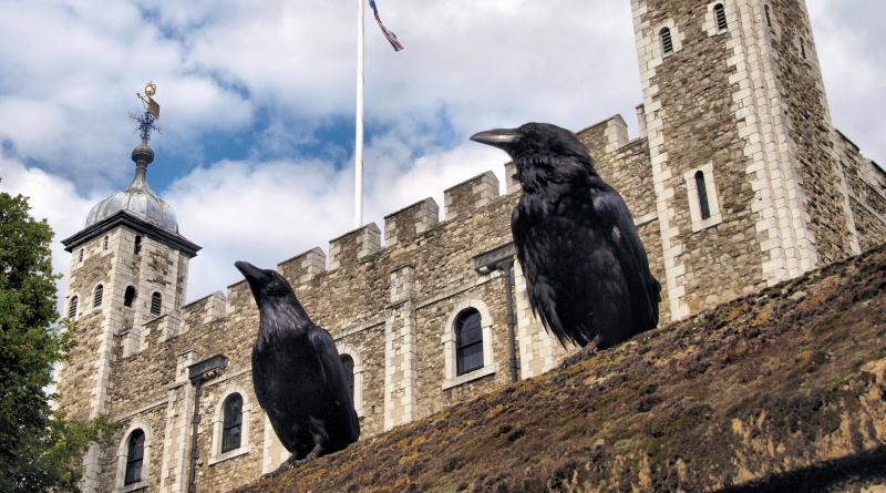 Вороны, живущие в лондонском Тауэре, настолько скучают, что даже бегут из дома. Птицы – не просто домашние животные. Согласно легенде, если шесть воронов, обитавших в башне, покинут крепость, монархия и башня падут.
